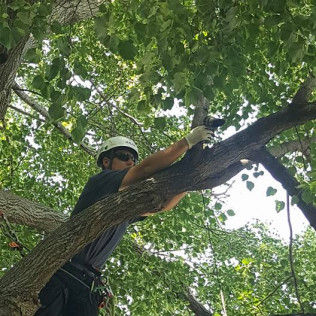 A tree service man on a large tree branch in Omaha, NE