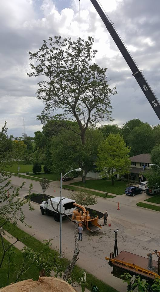 Who Offers Tree Removal in Omaha, NE?